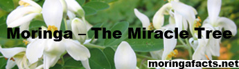 Moringa - The miracle tree